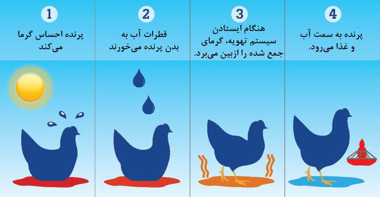 دفع گرما در مرغ