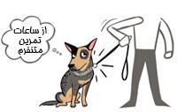 رفتار اشتباه با سگ