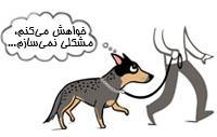 آزار سگ