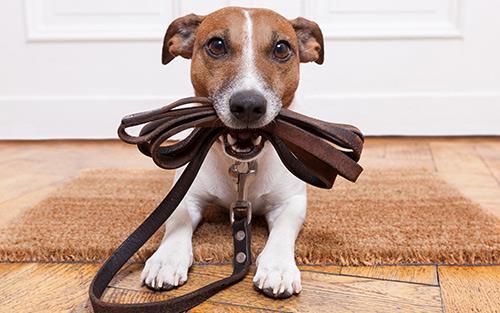آموزش و تربیت سگ