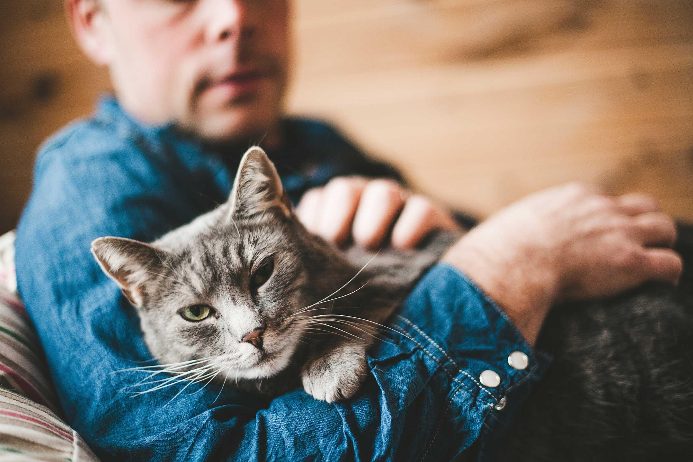 ارتباط با گربه