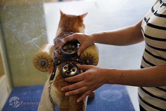 طب سوزنی گربه
