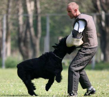 آموزش سگ اشنایزر