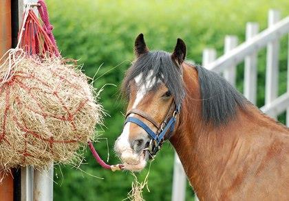 تغذیه اسب های مسابقه (بخش دوم)