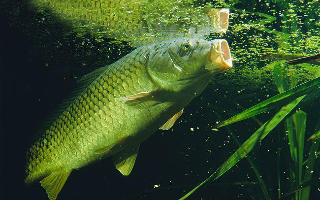 مدیریت تغذیه ماهیان گرم آبی