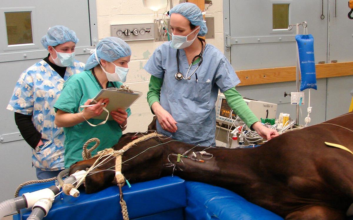 داروهای بیهوشی حیوانات و روش استفاده آنها