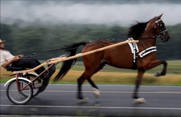 کاربری اسب استاندارد برد