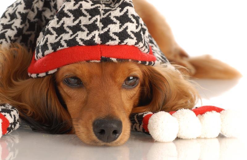 حفظ حیوانات خانگی از سرمای زمستان