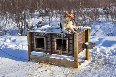 خانه سگ در زمستان