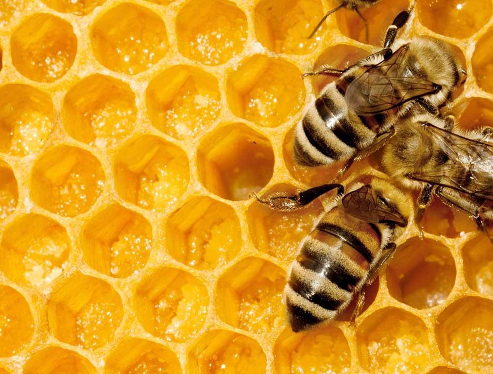 آلودگی 75درصد عسلهای دنیا به آفتکش