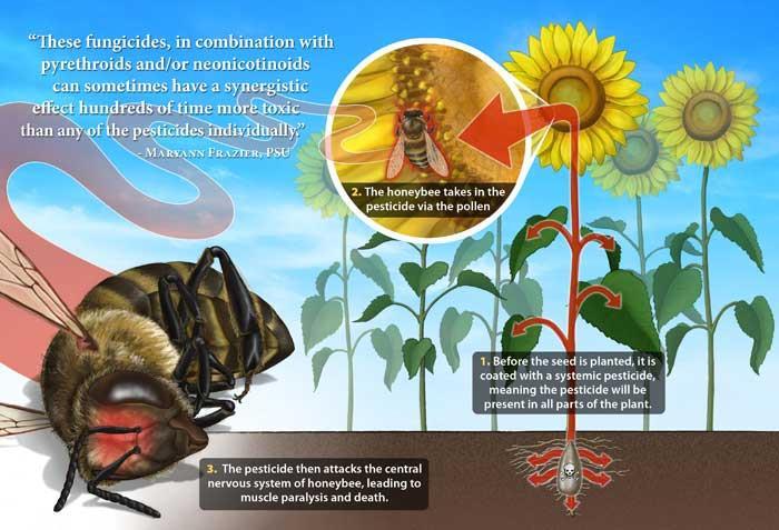 تاثیر نئونیکوتینوئیدها بر زنبورعسل