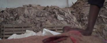 پوست کنده شده الاغها، آماده صادرات