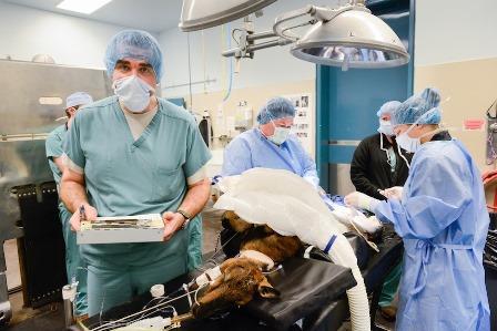 دانشکده دامپزشکی «دانشگاه کالیفرنیا، دیویس» برترین دانشکده دامپزشکی دنیا شناخته شد