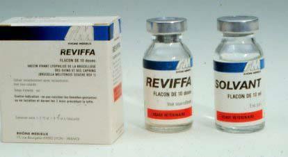 واکسن بروسلوز یا تب مالت