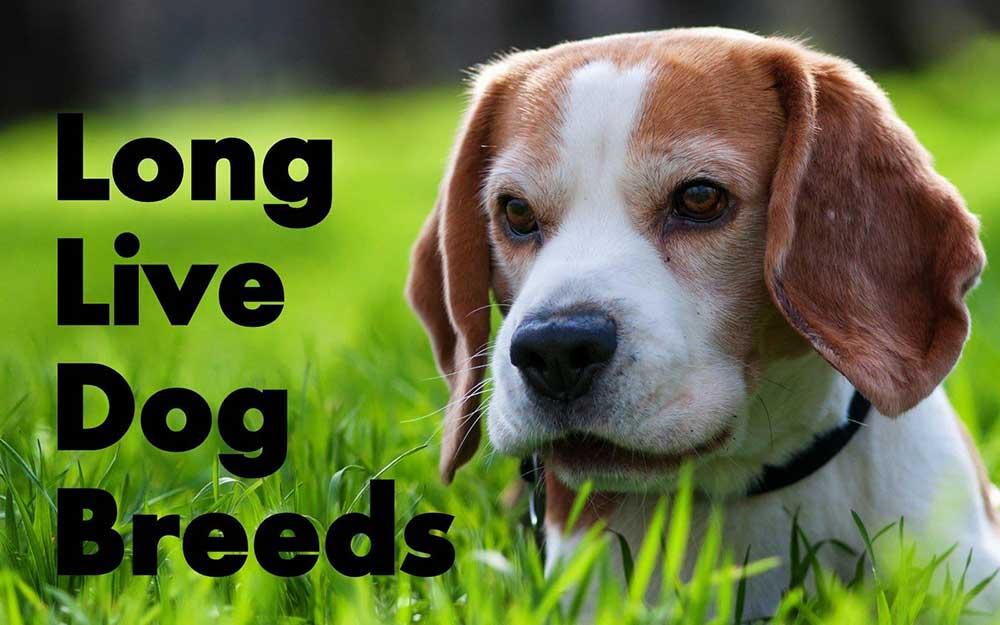 نژادهای سگ با طول عمر بالا