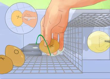 چرخش تخم مرغها