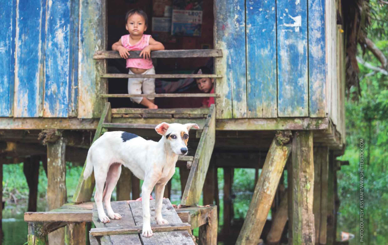 نگهداری از حیوانات خانگی چگونه به ما کمک میکند؟