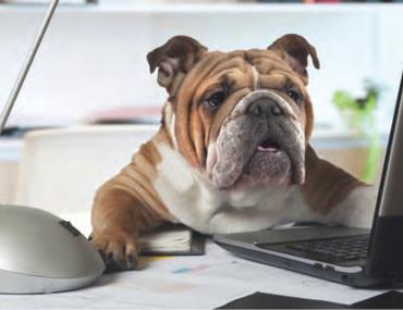 برای روزهای سخت کاریت سگتو بیار