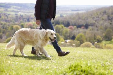 راه بردن یا پیاده روی سگ