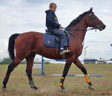 کاربری اسب بادنی