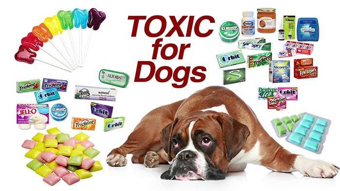 مسمومیت سگ با زایلیتول