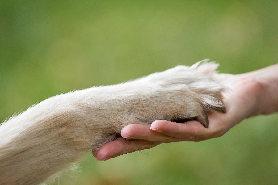 حیوانات راست دست یا چپ دست