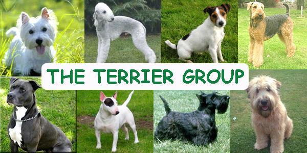 انواع سگهای تریر