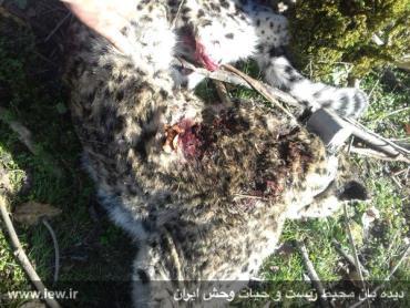 انقراض پلنگ ایرانی
