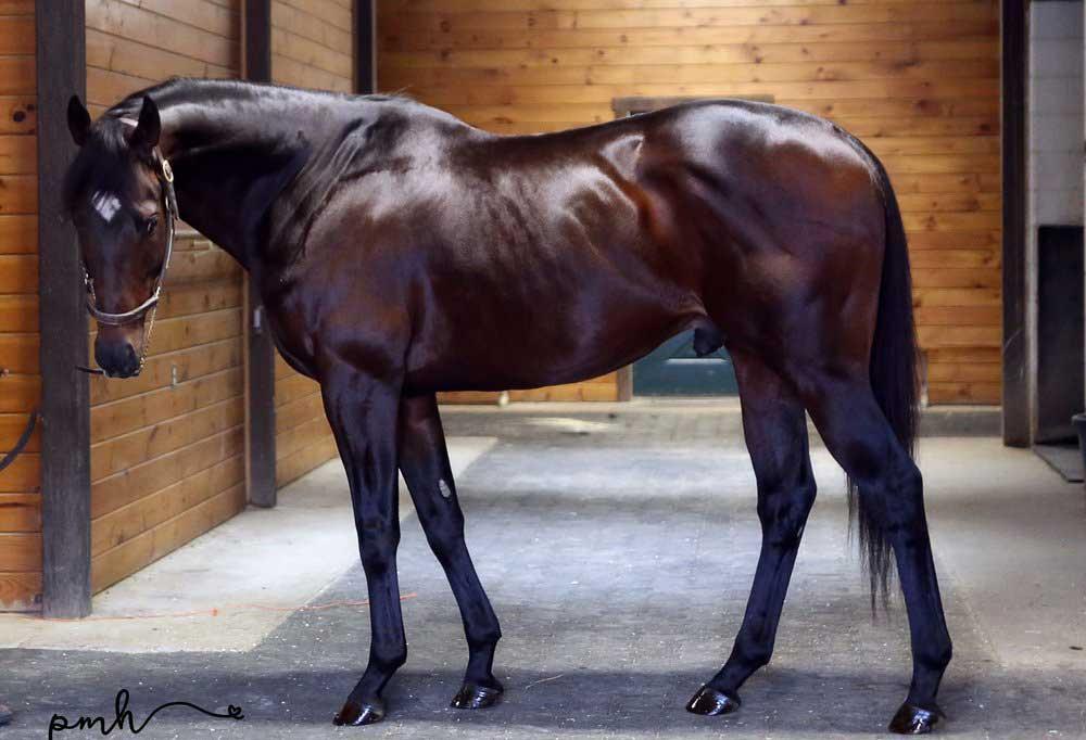 اسب نژاد تروبرد