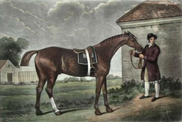 اسب تروبرد کلیپس