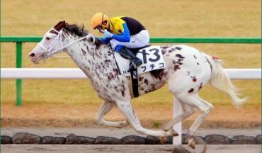 اسب تروبرد در مسابقه