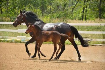 اسب و کره کلولند بی