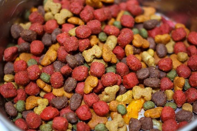 بهترین غذای خشک برای سگها و گربهها