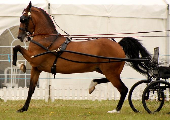 اسب نژاد هاکنی