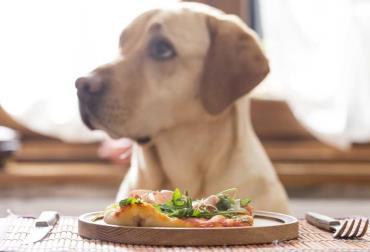 دستور پخت چند غذا برای سگ
