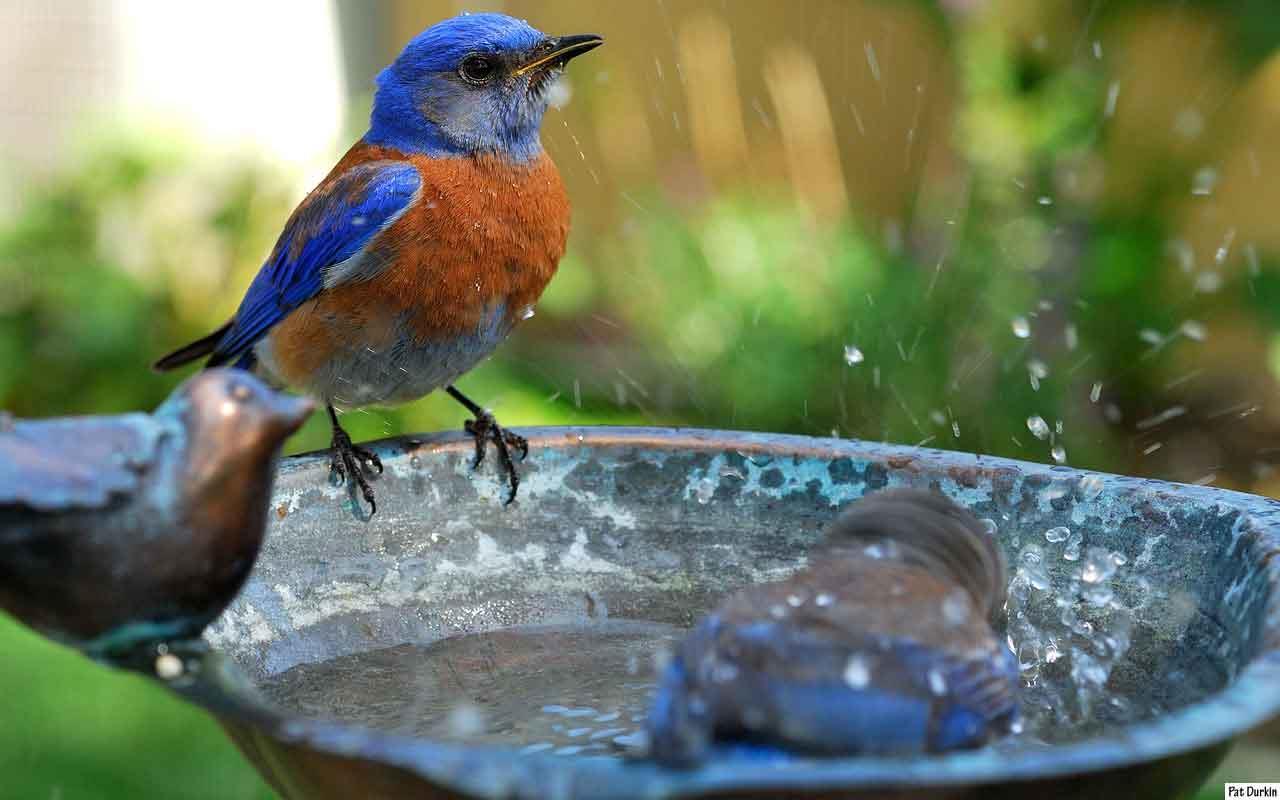 استفاده از آب اکسیژندار برای پرندگان زینتی