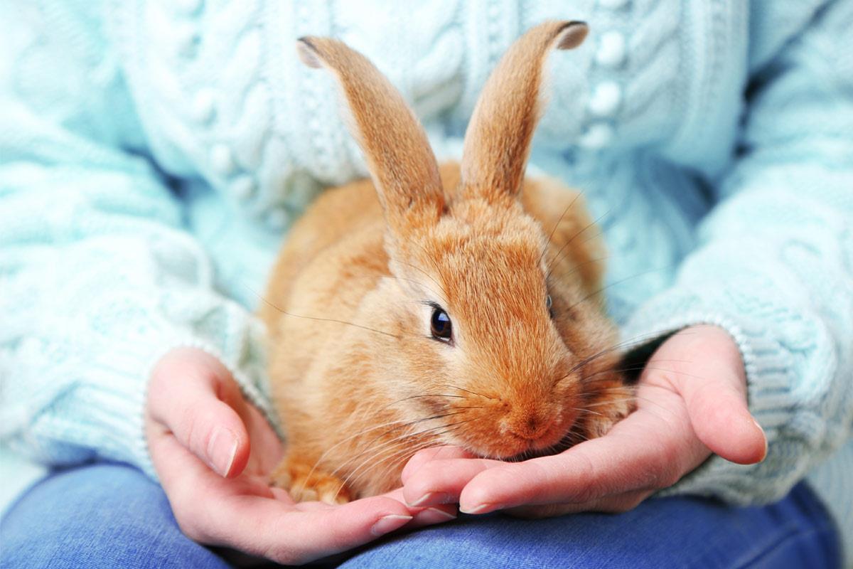 نکاتی مهم در نگهداری خرگوش ها