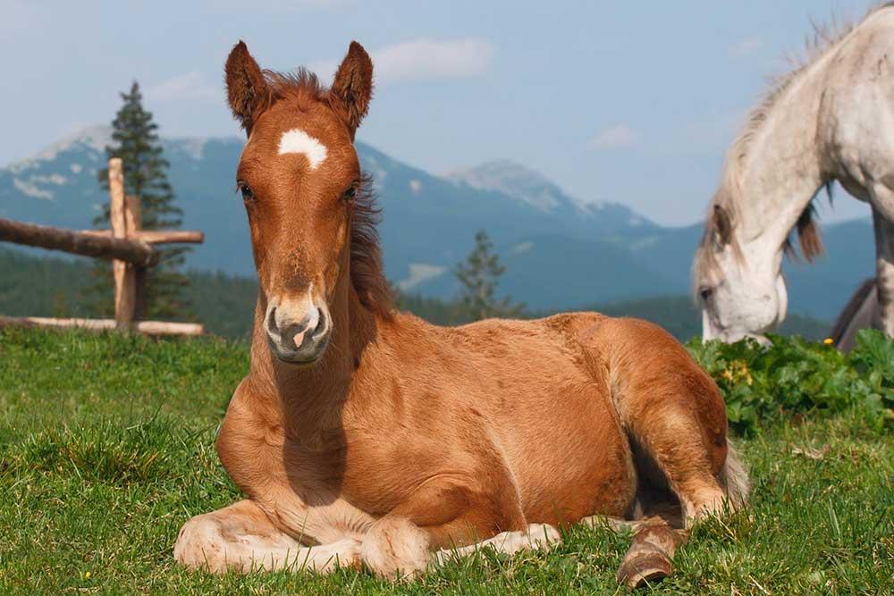 نرمى استخوان در کره اسب