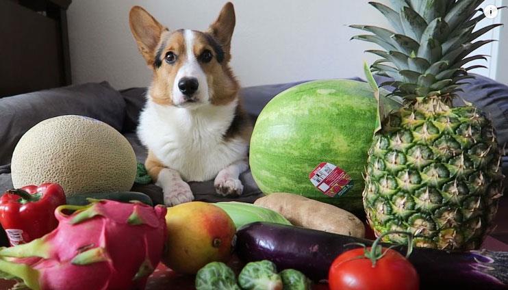 فواید مصرف میوه برای سگ ها