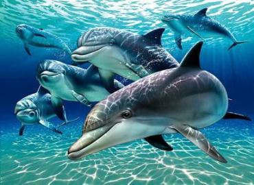 دلفینها، جنین زنان باردار را میبینند!