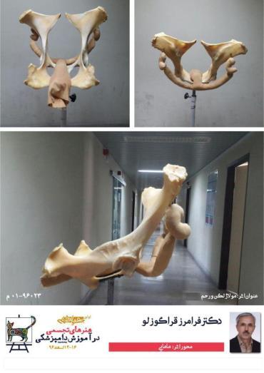 مجسمه سازی دامپزشکی