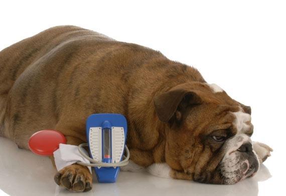 دیابت بیمزه مرکزی در سگ