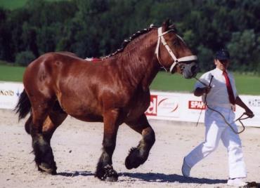 اسب نژاد آردنایز