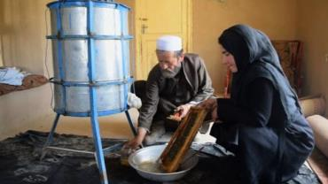 تولید عسل در افغانستان