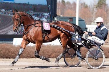 اسب نژاد فرنچ تروتر