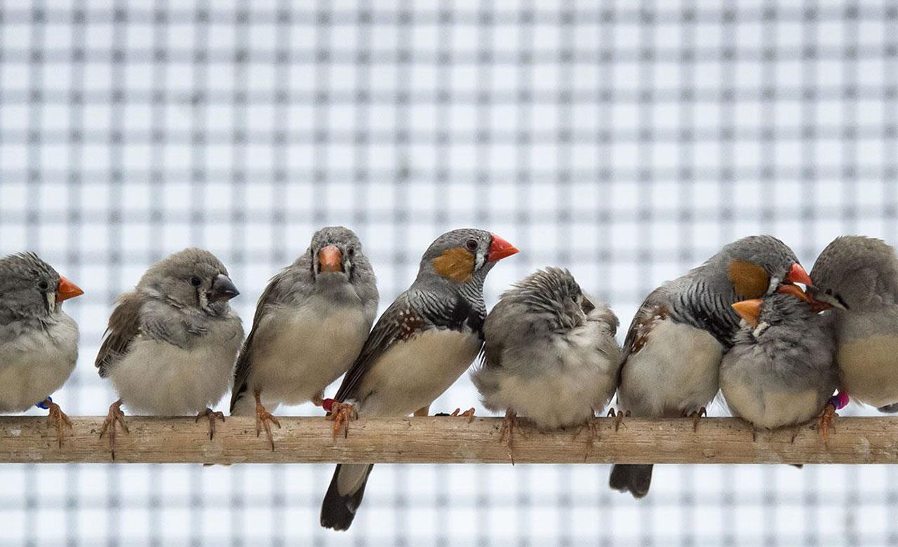 اصول نگهداری پرنده فنچ