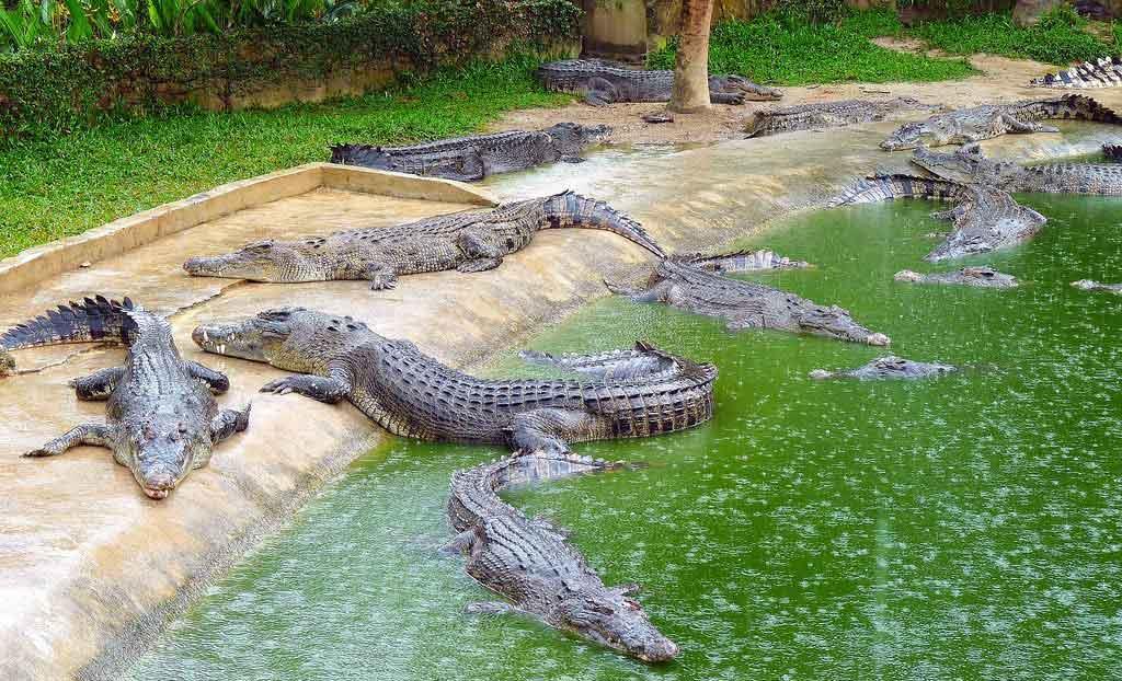 بیماریهای تمساح و کروکودیل