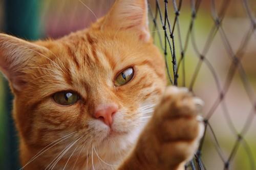 نکاتی جالب در مورد گربهها