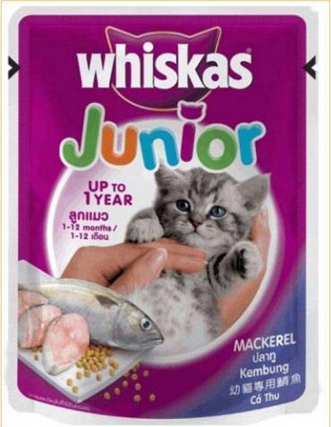 سوپ بچه گربه