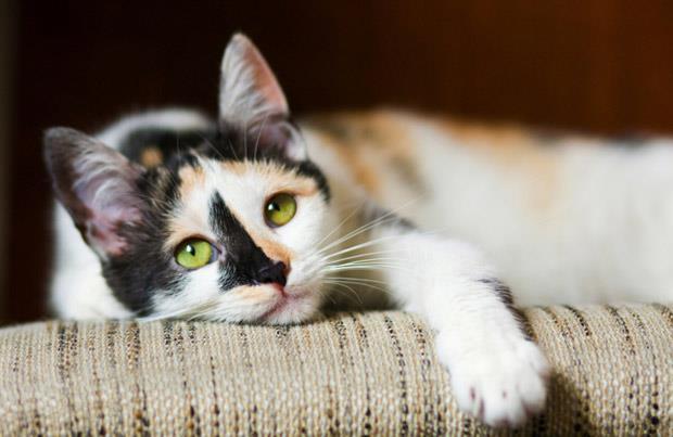 اصول نگهداری از گربه (بخش دوم)